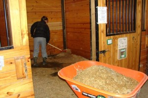 Person cleaning horse stall