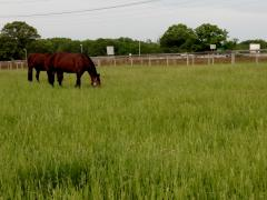 Rotational grazing horse