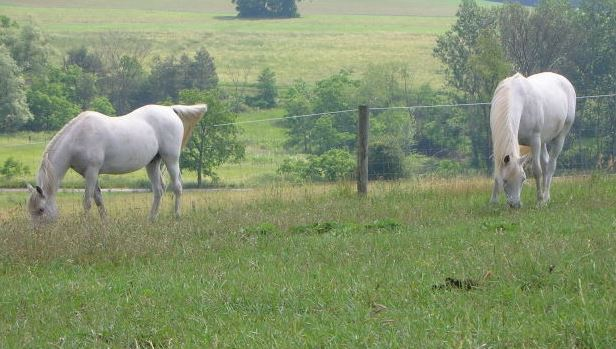 Picture of two horse in a pasture