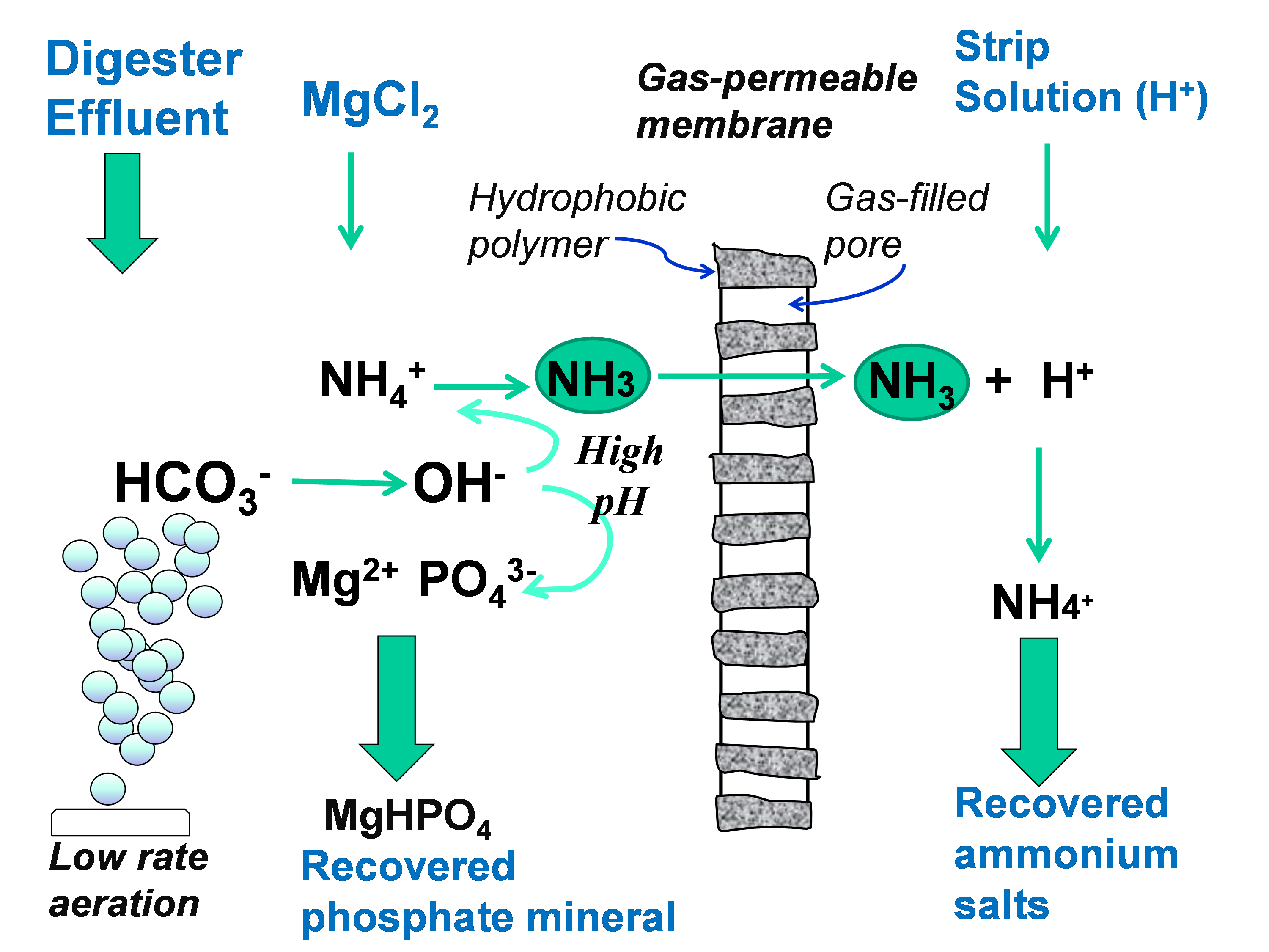 Graphic of gas-permeable membrane