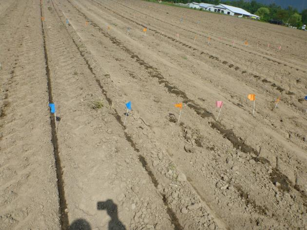 the plots where the precision manure injector study was performed