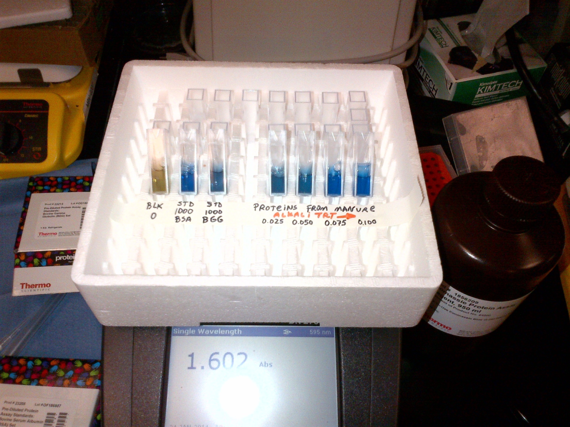 Test tubes filled with proteins from manure