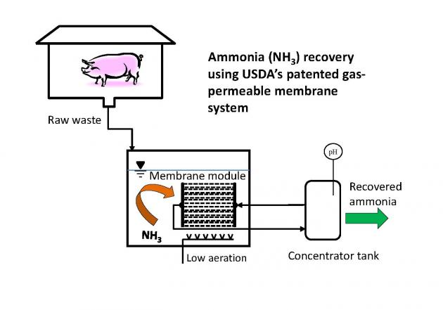 Diagram of ammonia recovery system using with gas permeable membranes and low-rate aeration