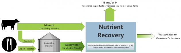 Figure 1. Nutrient recovery fact sheet diagram